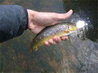 Ciuvascia che pesca su una filatura